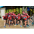 Team 77 / Raid Amazones Sri Lanka 2018 - J4 The Game