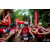 Team 03 / Raid Amazones Vietnam 2019 - J2 Bike and Run